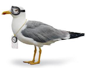 OL-Vogel